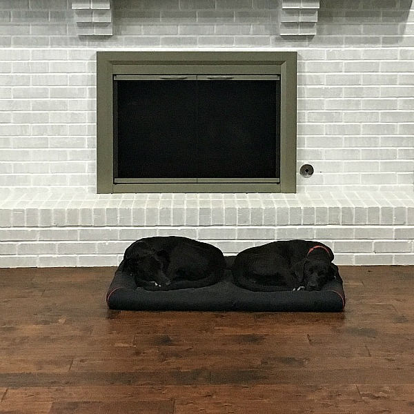 The puppies (Rocky and Java) | rainerlife.com