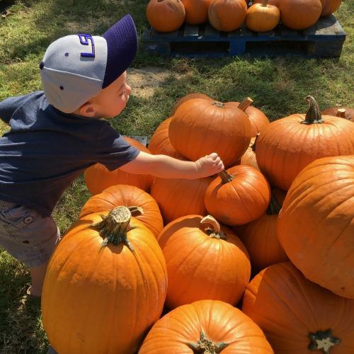 Gavin picking out a pumpkin | rainerlife.com