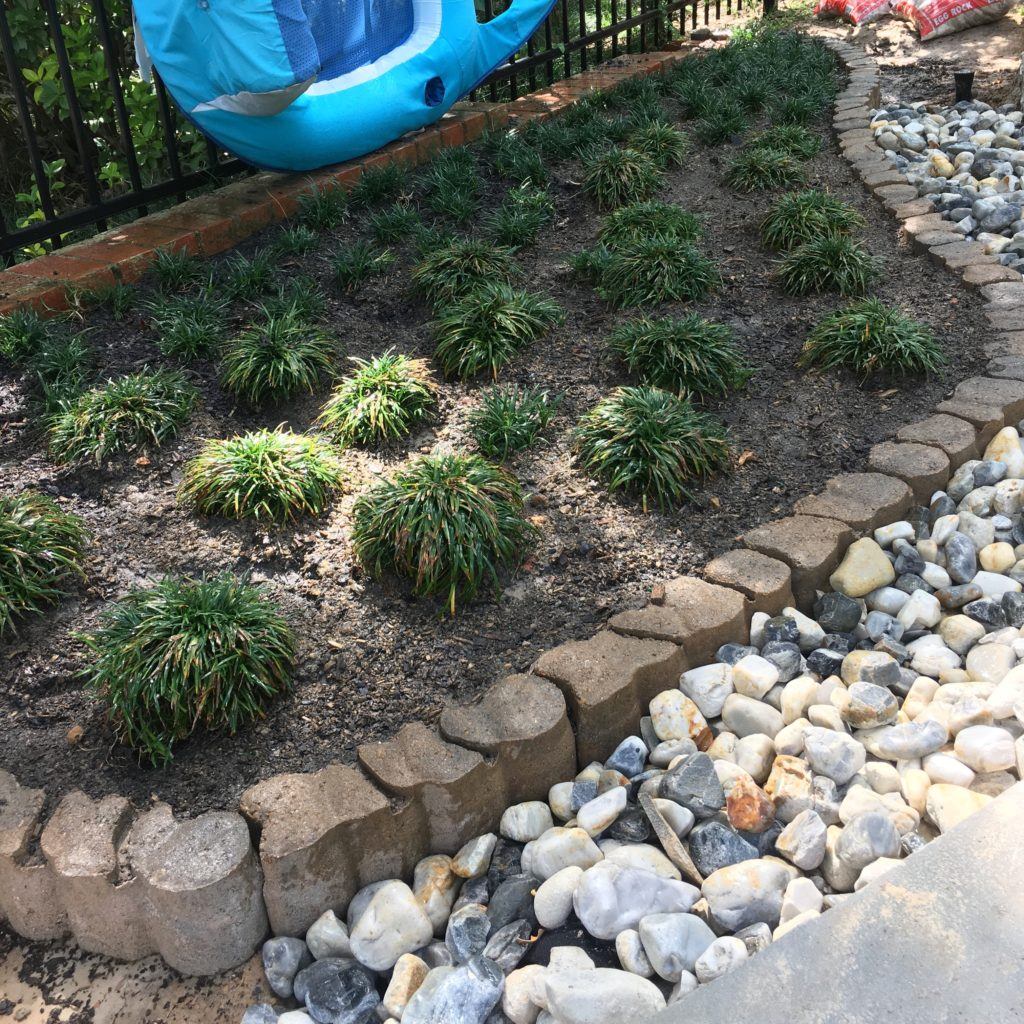Mondo grass bed | rainerlife.com