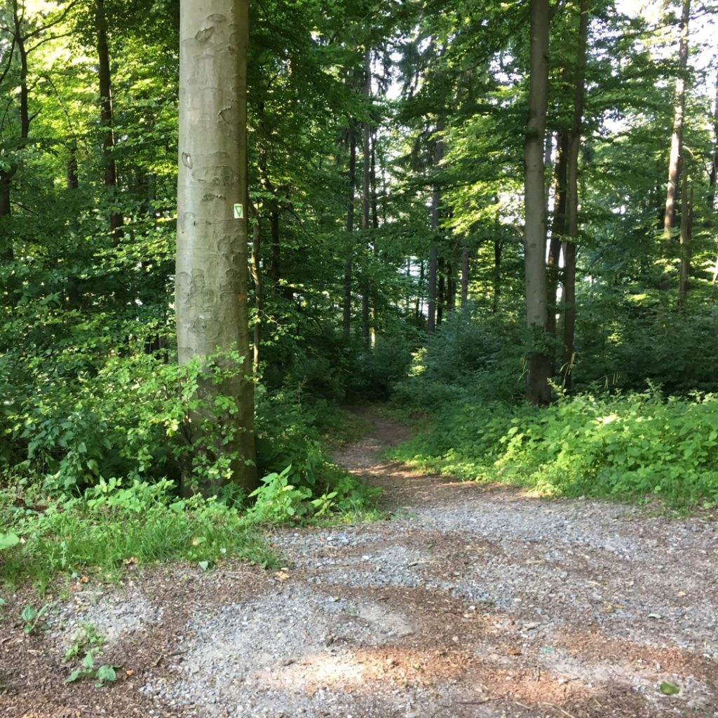 Trails at Königstuhl | rainerlife.com