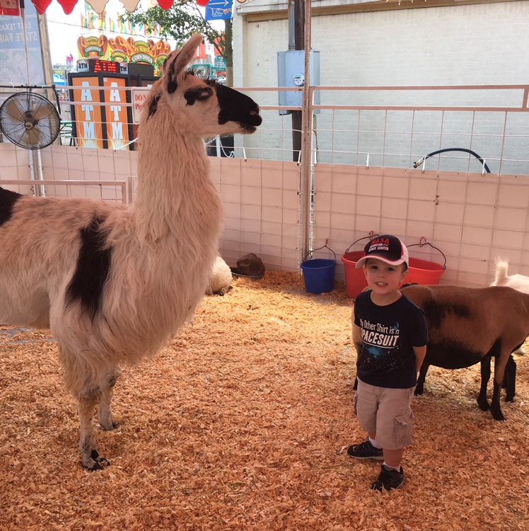 Gavin at the Fair petting zoo | rainerlife.com